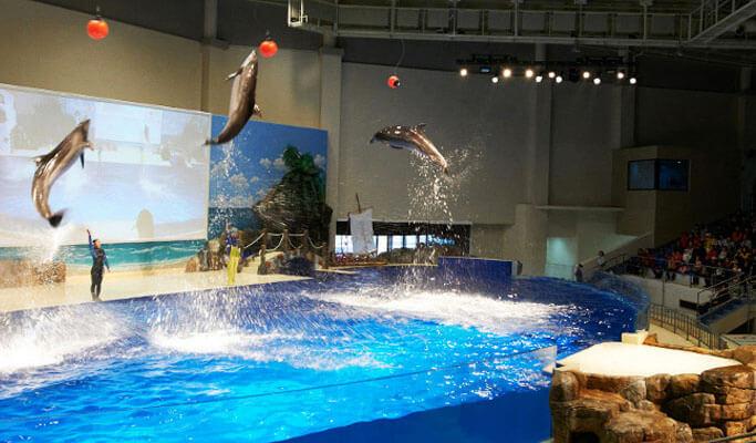 Aqua Planet Jeju Discount Ticket
