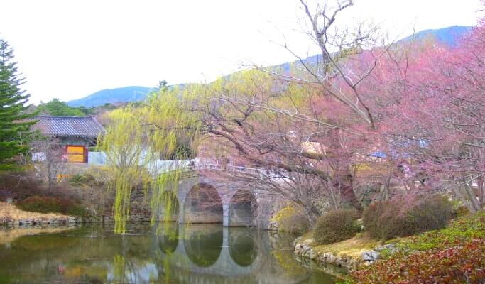 Jinhae Cherry Blossom Festival Private Tour Departing From Busan  Trazy K