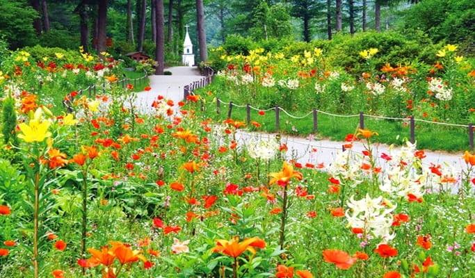 Seoul Vicinity Tour 4 in 1: Nami Island + Petite France + Rail Park + Garden of Morning Calm