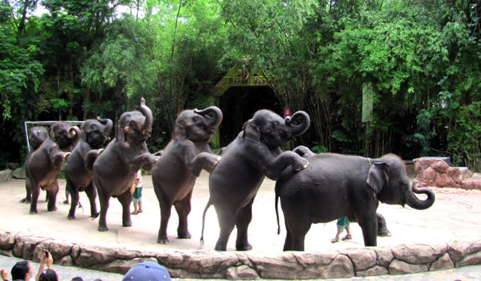 Safari World Bangkok Discount Ticket (+Lunch buffet/Transfer options)